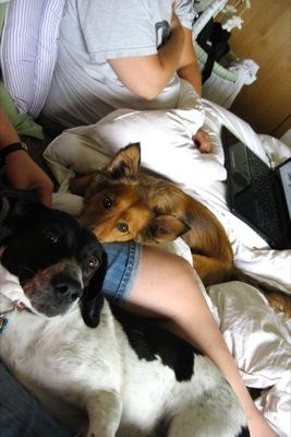 Bed cuddles